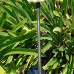 TWO Angel Solar Powered Garden Yard Stake Light Set of 2pcs