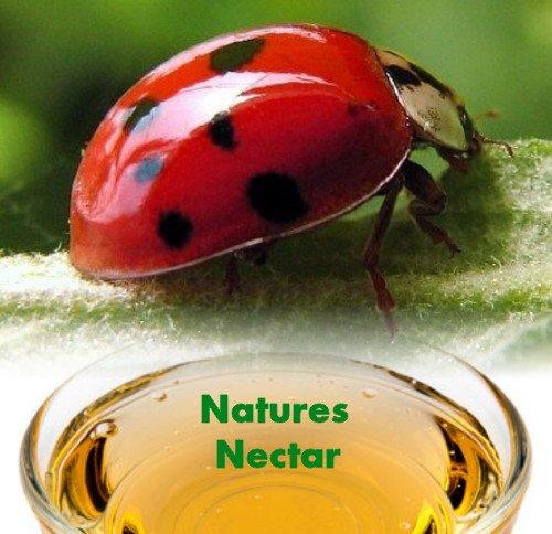 Live Ladybugs Hirt S Gardens Approximately 1550 Plus