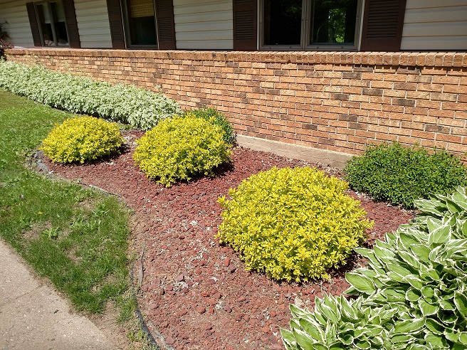 Inexpensive Landscaping Shrubs : Cheap and easy landscaping tips landscape lighting